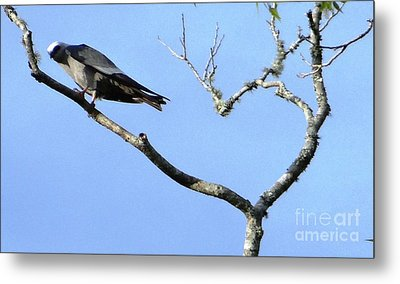 Metal Print featuring the photograph Watching You Like A Hawk by Ecinja Art Works