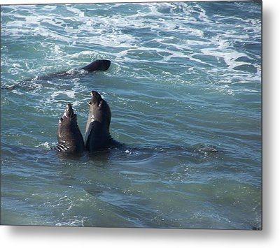Metal Print featuring the photograph Water Chorus by Christine Drake