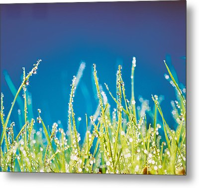 Water Droplets On Blades Of Grass Metal Print by Panoramic Images