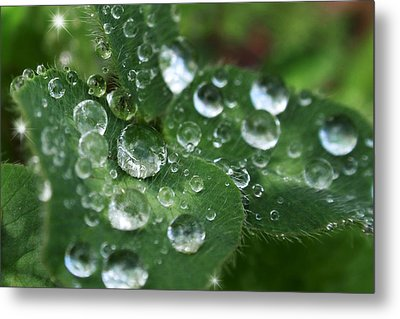 Water Drops On Green Clover Metal Print by Christina Rollo