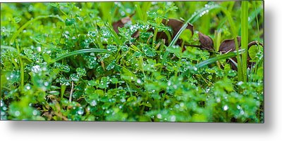 Water Drops On The  Grass 0048 Metal Print by Terrence Downing