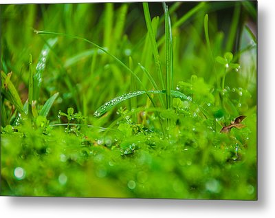 Water Drops On The  Grass 0084 Metal Print by Terrence Downing