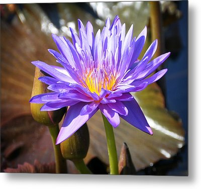 Metal Print featuring the photograph Water Flower 1004d by Marty Koch