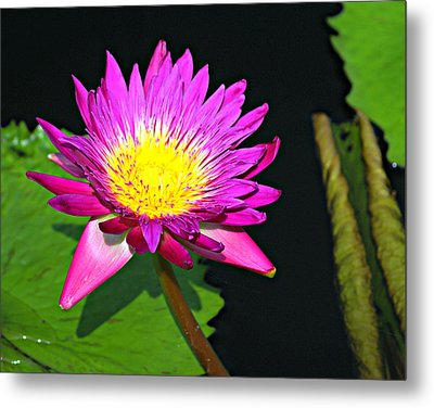 Metal Print featuring the photograph Water Flower 10089 by Marty Koch