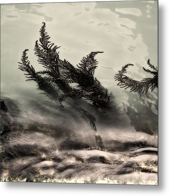 Water Fronds Metal Print by Dave Bowman