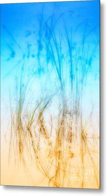 Water Grass - Outer Banks Metal Print by Dan Carmichael