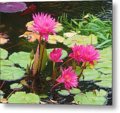 Water Lilies 008 Metal Print by Robert ONeil