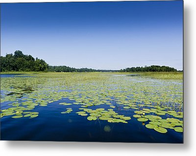 Water Lilies Metal Print by Gary Eason
