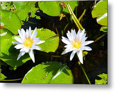 Water Lilies With Lily Pads In A Pond Metal Print by Panoramic Images