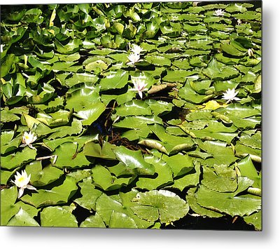 Water Lillies Metal Print by Les Cunliffe