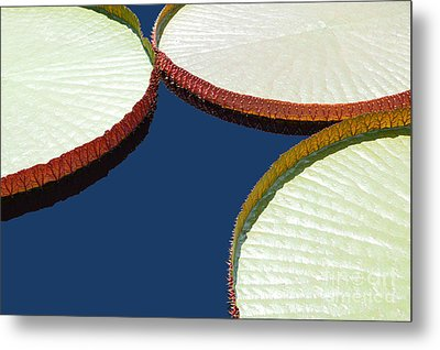 Water Lilly Platters Metal Print