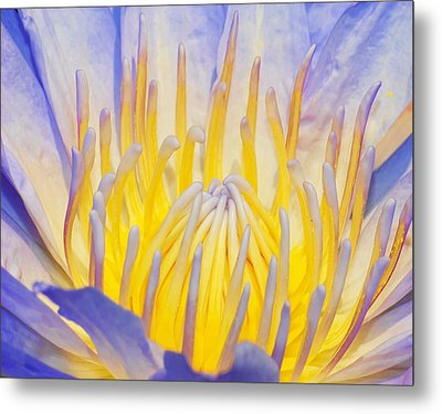 Water Lilly Metal Print