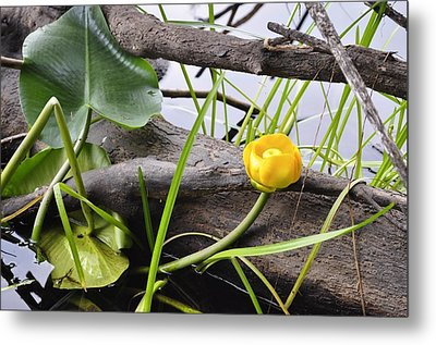 Metal Print featuring the photograph Water Lily by Cathy Mahnke