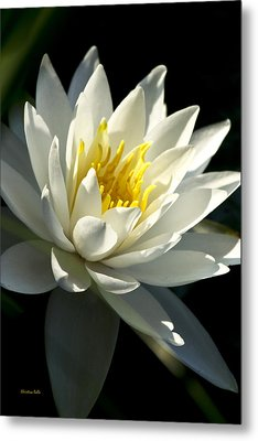 Water Lily Metal Print by Christina Rollo
