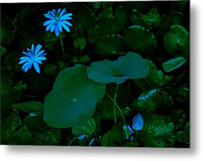Water Lily Metal Print by Donald Chen