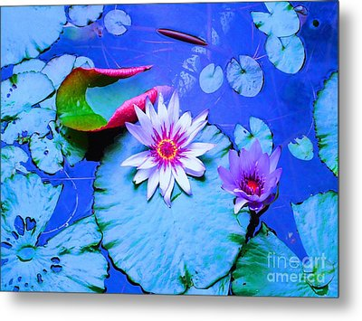 Water Lily I Metal Print by Ann Johndro-Collins