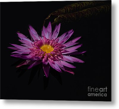 Water Lily I Metal Print