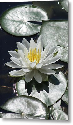 Metal Print featuring the photograph Water Lily II by Anita Oakley