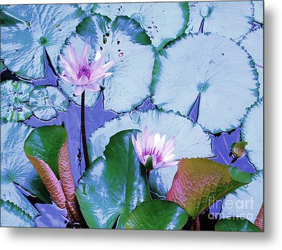 Water Lily II Metal Print by Ann Johndro-Collins