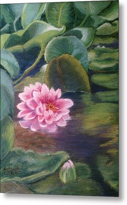 Metal Print featuring the pastel Water Lily In Bloom  Pastel by Antonia Citrino