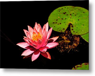 Metal Print featuring the photograph Water Lily by John Johnson