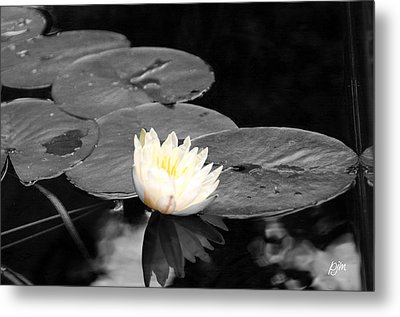 Metal Print featuring the photograph Water Lily by Phil Mancuso