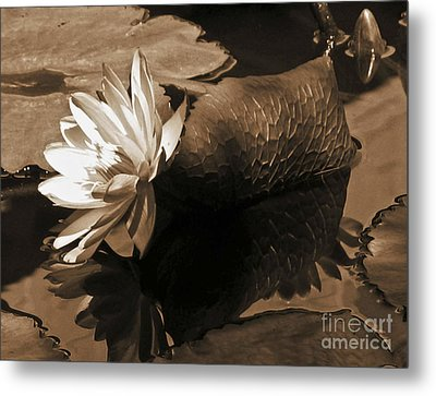 Water Lily Pond Sepia Toned Photo Metal Print by Carol F Austin