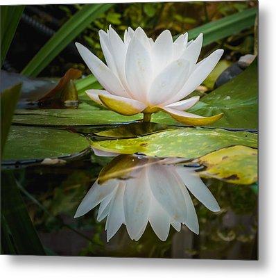 Water-lily Reflection Metal Print by Yvon van der Wijk