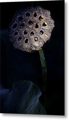 Water Lily Seed Pod Metal Print