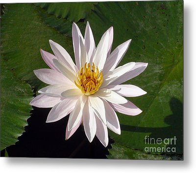 Metal Print featuring the photograph Water Lily by Sergey Lukashin