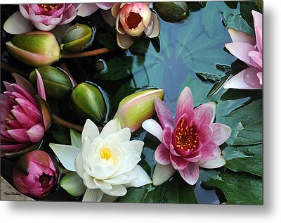 Metal Print featuring the photograph Water Lily Series 1 by Haleh Mahbod
