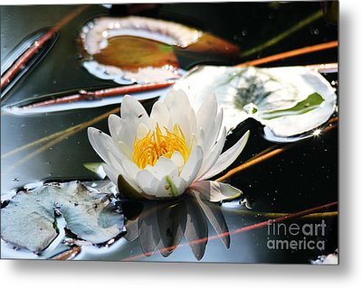 Metal Print featuring the photograph Water Lily by Trina  Ansel