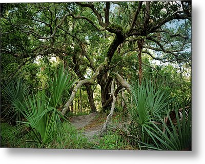 Water Oak. Three Lakes W.m.a. Metal Print by Chris  Kusik