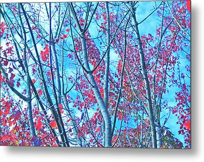 Metal Print featuring the photograph Watercolor Autumn Trees by Tikvah's Hope
