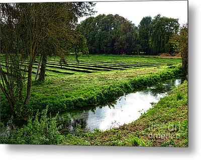 Watercress Field Metal Print