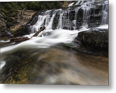 Watered Log Metal Print by Bill Cantey
