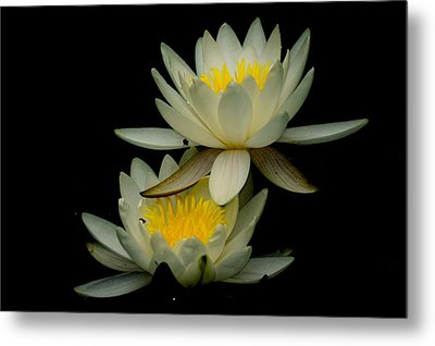 Waterflower Metal Print