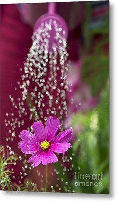 Watering The Cosmos Metal Print by Tim Gainey