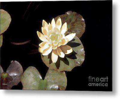 Waterlily II Metal Print by Linda  Parker