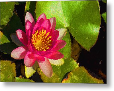 Waterlily Impression In Fuchsia And Pink Metal Print