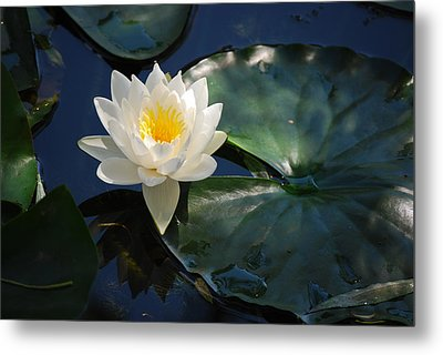 Metal Print featuring the photograph Waterlily by Janis Knight