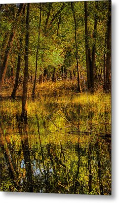 Metal Print featuring the photograph Watery Ramble by Kimberleigh Ladd