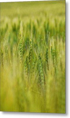 Waving Wheat Metal Print by Skip Hunt