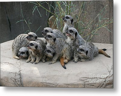 We Are Family Metal Print by Judy Whitton