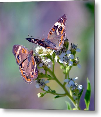 Metal Print featuring the photograph We Make A Beautiful Pair by Deena Stoddard