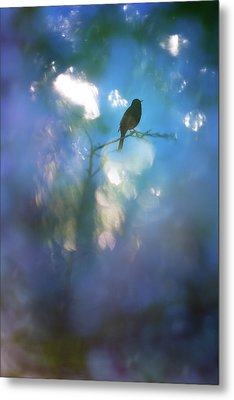 Metal Print featuring the photograph Weather To Fly  by Richard Piper
