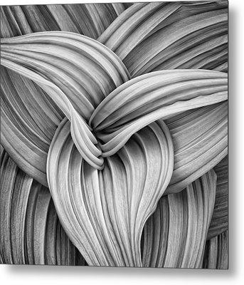 Web And Flow Metal Print by Darylann Leonard Photography