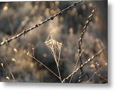 Metal Print featuring the photograph web by David S Reynolds