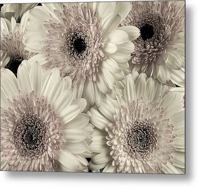 Wedding Bouquet -gerbera Duotone Metal Print