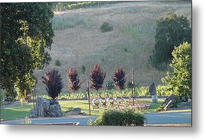 Metal Print featuring the photograph Wedding Grounds by Shawn Marlow